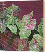 Beauty In Decorative Foliage Wood Print