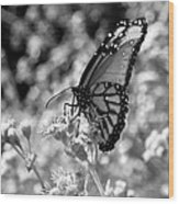 Butterfly Beauty In Nature Wood Print