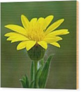 Beauty In Yellow Wood Print