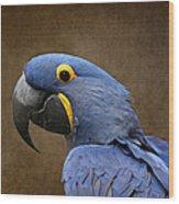 Beauty Is An Enchanted Soul - Hyacinth Macaw - Anodorhynchus Hyacinthinus Wood Print