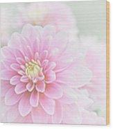 Beauty Iv Wood Print