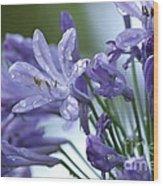 Beauty Lilies Wood Print