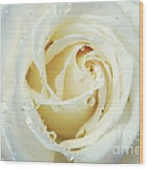 Beauty Of A White Rose Wood Print