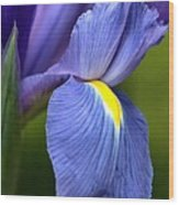 Beauty Of Iris Wood Print