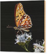 Beauty Of Nature Butterfly Brazil 2 Wood Print