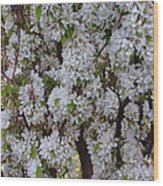 Beauty Of Spring Wood Print by Yvette Pichette