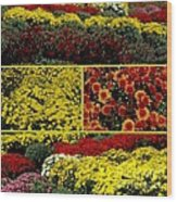 Beauty Of The Fall Mums Wood Print