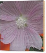 Beauty Of The Hollyhock  Wood Print