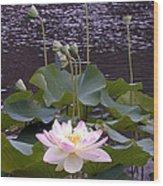 Beauty of the Lotus Wood Print