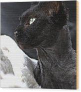Beauty Of The Rex Cat Wood Print