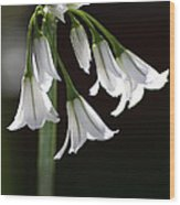 Beauty Of The Snowdrops Wood Print