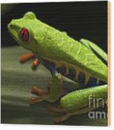Beauty Of Tree Frogs Costa Rica 2 Wood Print