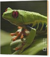 Beauty Of Tree Frogs Costa Rica 3 Wood Print