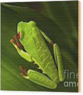 Beauty Of Tree Frogs Costa Rica 6 Wood Print