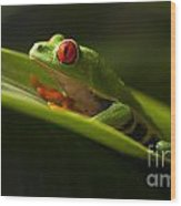 Beauty Of Tree Frogs Costa Rica 7 Wood Print