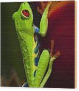 Beauty Of Tree Frogs Costa Rica 9 Wood Print