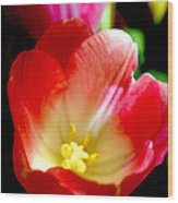 Beauty Of Tulips Wood Print