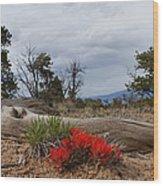 Beauty On 25 Mesa Panoramic Wood Print
