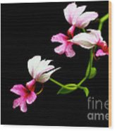 Beauty On Black Wood Print