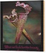 Beauty Pitcher Plants Wood Print