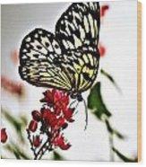 Beauty Wing Wood Print