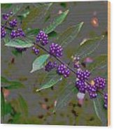 Beautyberry Wood Print