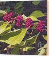 Beautyberry Wood Print