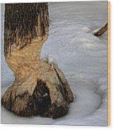 Beaver Cut 4 Wood Print