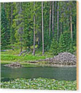 Beaver Dam In Heron Pond In Grand Teton National Park-wyoming Wood Print