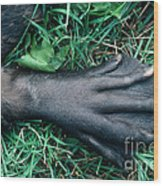 Beaver Foot Wood Print
