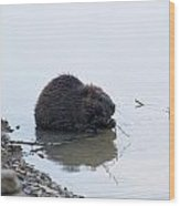 Beaver In The Shallows Wood Print