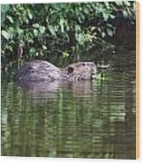 beaver swims in NC lake Wood Print