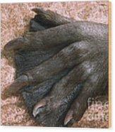 Beavers Hind Foot Wood Print