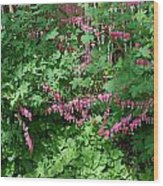 Bed Of Bleeding Hearts Wood Print