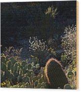 Bed Of Cactus Wood Print