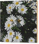 Bed Of Daisies Wood Print
