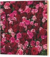 Bed Of Red Roses Wood Print