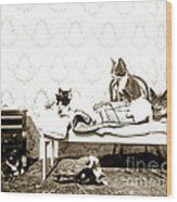Bed Time For Kitty Cats Histrica Photo Circa 1900 Wood Print