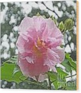 Bedazzled By The Light Louisiana Confederate Rose Wood Print