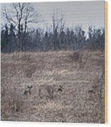 Bedded Whitetail Deer Wood Print