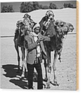 Bedouin Camel Minder Recieves Call On A Mobile Phone With Camels In The Sahara Desert At Douz Tunisia Wood Print