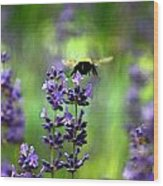 Bee 4 Wood Print