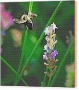 Bee 6 Wood Print