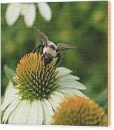 Bee 7 Wood Print