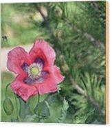 Bee A Flower Wood Print