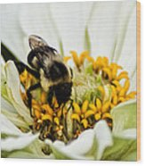 Bee All That You Can Bee Wood Print