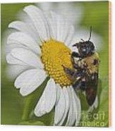Bee And Daisy Wood Print