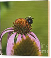 Bee And Echinacea Flower Wood Print