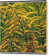 Bee And Goldenrod Wood Print