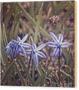 Bee And Squill Wood Print